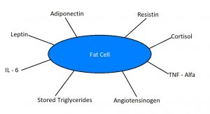 Fat cell - a veritable endocrine factory!