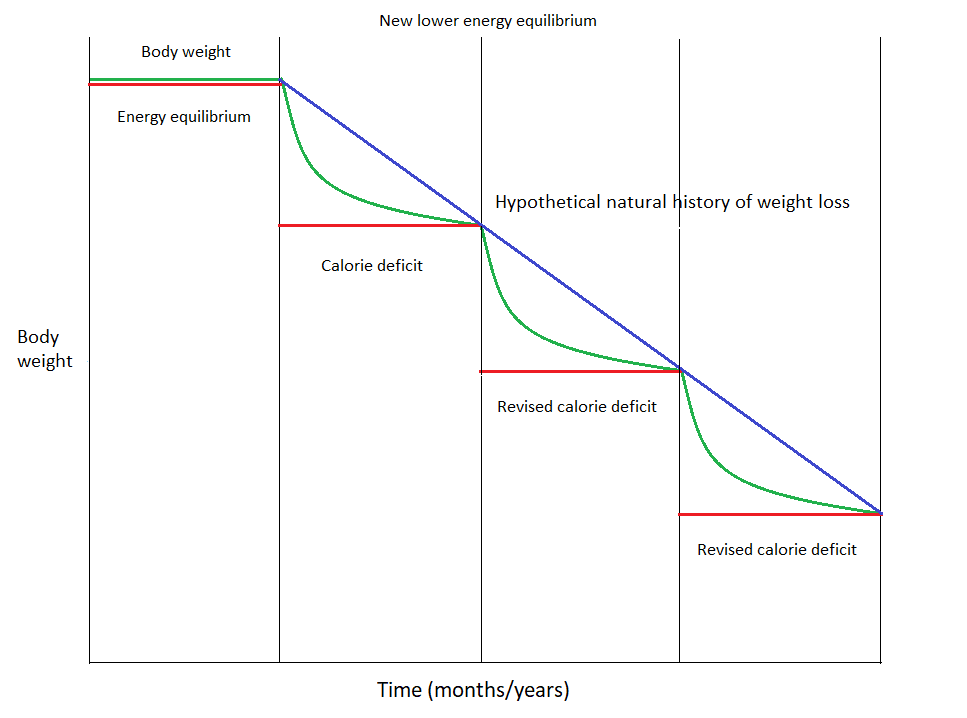 A graph depicting dynamic equilibrium of body weight (cycle of weight loss).